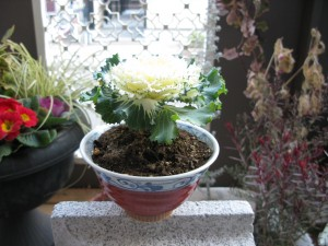 ornamental cabbage in a rice bowl